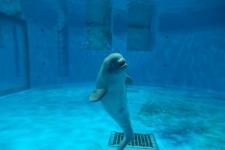 生後1か月の仔イルカ