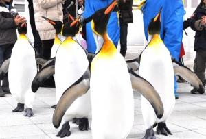 ペンギンパレード開催